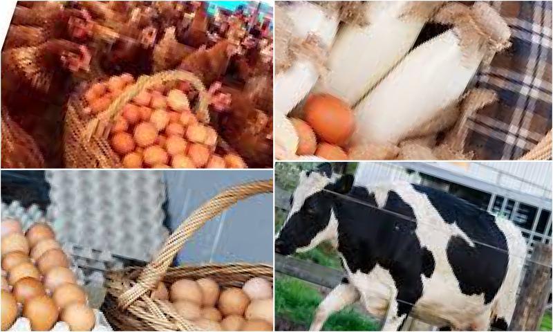 Mutlu Tavuk Organik Yumurtayı Getiriyor